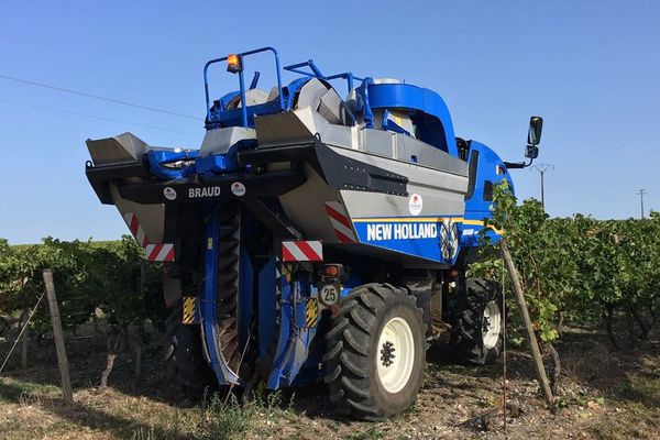 En Charente, les vendanges viennent de commencer dans les vignes du Cognaçais.