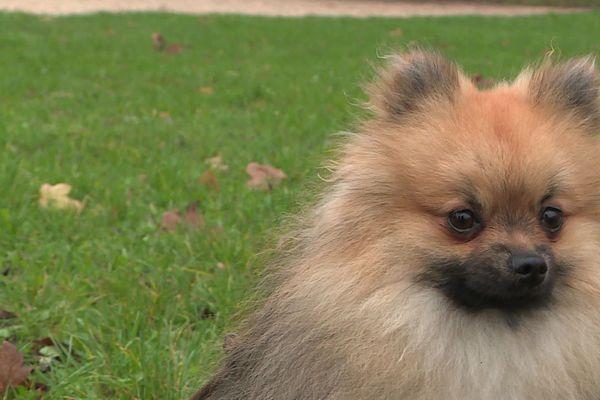 Éducateur canin, thérapeute animal... Le bien-être des animaux de compagnie est au cœur de nouvelles pratiques.