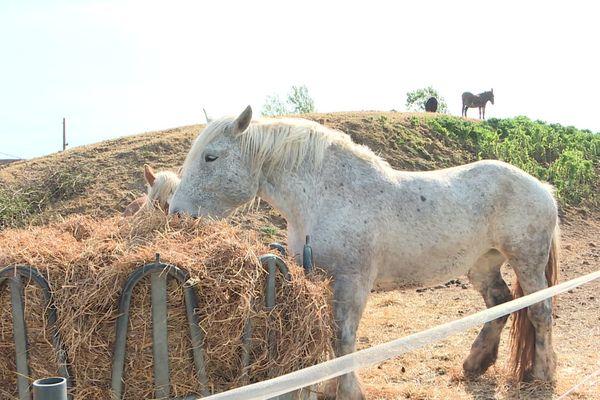 Le centre équestre Le Teinturier à Colomiers possède une soixantaine de chevaux. Malgré l'arrêt des cours, il faut toujours les nourrir et payer les autres charges.
