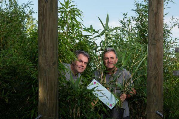 Pierre et Marc Steinmetz dans leur bambuseraie à Mommenheim dans le Bas-Rhin.