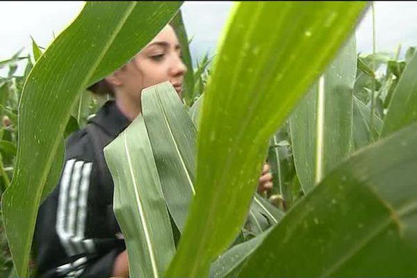 Sur la piste d' un job d'été, les jeunes peuvent se tourner vers l'agriculture