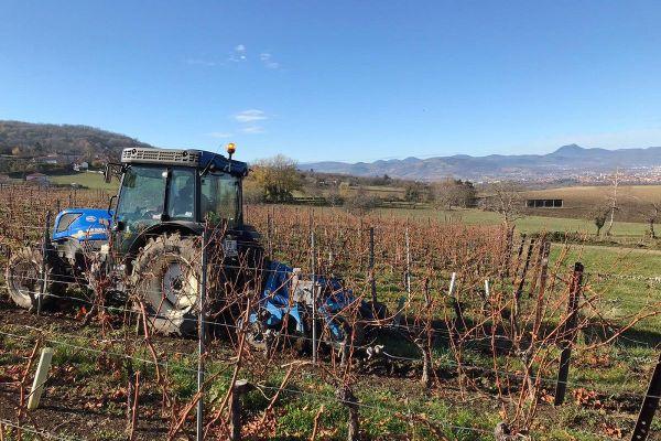 Dans le Puy-de-Dôme, la période des fêtes de fin d'année, d'ordinaire très importante pour les vignerons, se trouve perturbée par le confinement.