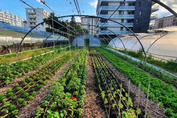 Une ferme urbaine a vu le jour le 20 mai à Annecy, peu après le confinement
