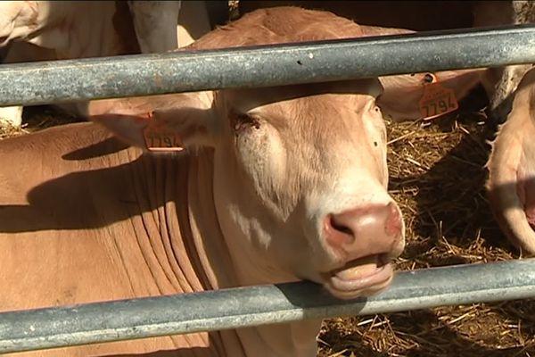 Le Life Beef Carbon se propose de réduire fortement les émission de gaz à effet de serre des élevages bovins dans l'hexagone qu'il produisent actuellement à hauteur de 5%