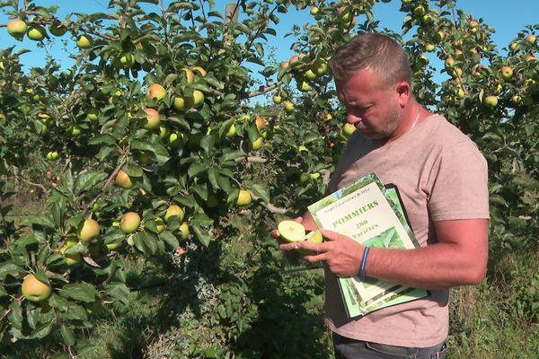 Benoit Piron - technicien au conservatoire de pommes et de poires de Pétré - St Gemme La Plaine (Vendée)
