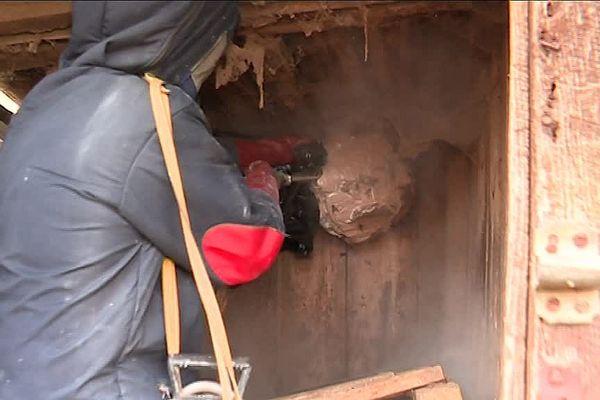 Août 2018- Destruction d'un nid de frelons asiatiques à Breteuil sur Iton (Eure)