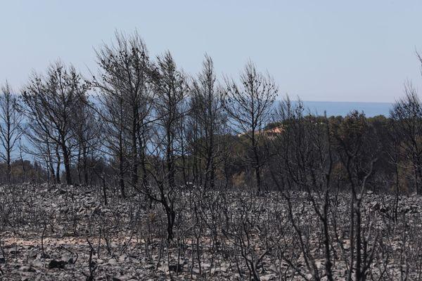 L'incendie a ravagé une grande partie de la forêt autour de la D9.