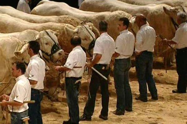 La race charolaise en vedette mors d'un précédent Sommet de l'élevage de Cournon, en Auvergne.
