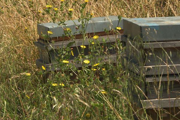Les ruches de la société Apilab sont installées à La Pallice, à proximité du dépôt de l'entreprise Picoty.