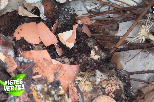Les déchets végétaux, mais aussi les coquilles d'oeuf et même les rouleaux de papier toilette vont alimenter le compost.