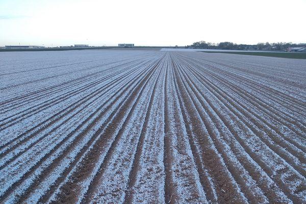 Certains champs de betteraves ont perdu 100% de leurs semis.