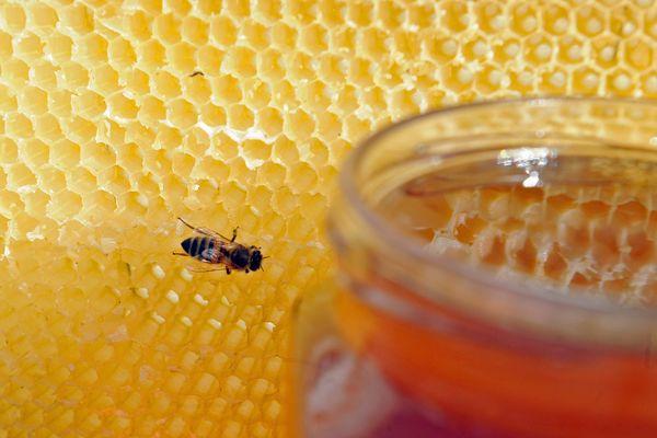 La production de miel a été divisée par trois.