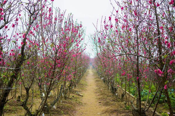 Une rangée d'arbrisseaux en fleurs - Photo d'illustration