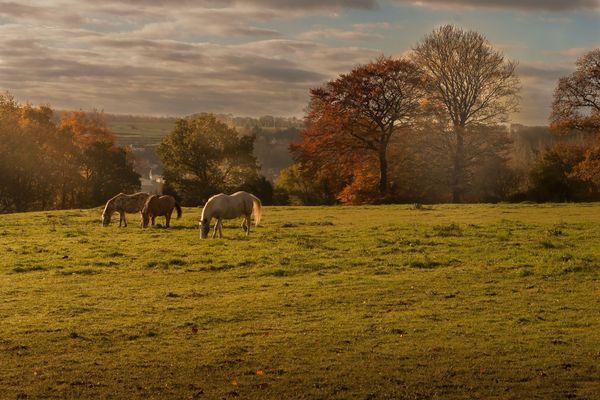 Dans l'Orne, les couleurs de l'automne subliment les paysages du Perche.