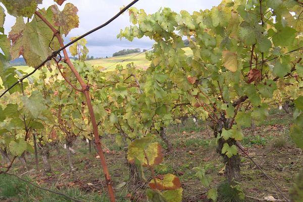 En raison du Covid-19, les viticulteurs du Jura ne parviennent pas à vendre, malgré une bonne année.