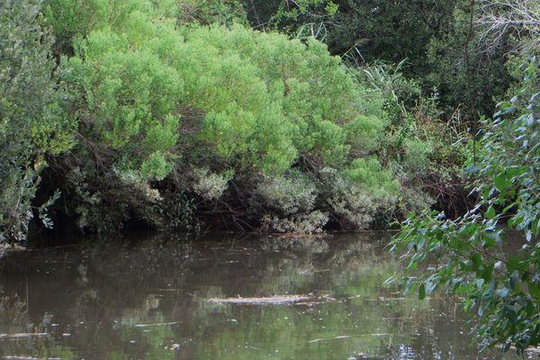 Un univers naturel exceptionnel : la rivière la Leyre à Biganos est d'une très grande qualité.