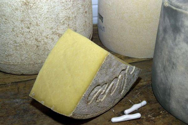 Cette année, la production de Salers AOP devrait atteindre péniblement 26.000 fromages contre 30.000 à 32.000 en temps normal, à cause de la sécheresse.