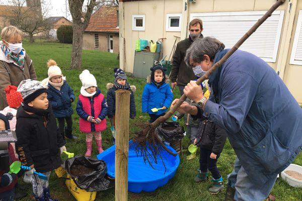 Les enfants de Brin sur Seille découvrent le système racinaire de l'arbre