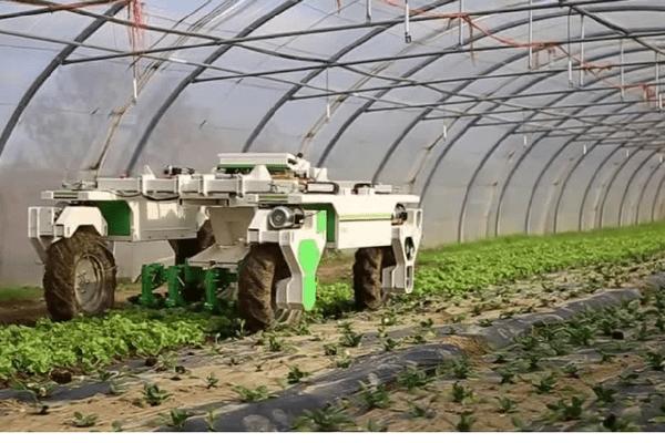 Le robot Oz est équipé d'un laser et de caméras pour se diriger seul dans les cultures.