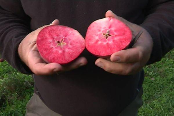 À Eyburie, en Corrèze, Philippe Serre et sa fille Émilie cultivent une pomme à jus dont la chair est rouge : la Redmoon !