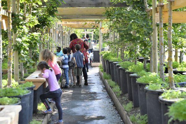 1 000 arbres en pot ont été installés sur le quai de la fosse