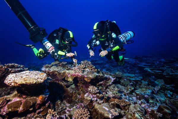 Pendant 4 ans, l'expédition scientifique Unther the pole a exploré les fond de 3 océans.
