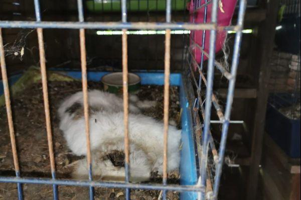 Les lapins sont morts, vraisemblablement affamés, dans les cages.