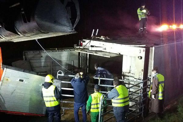 Une bétaillère s'est retournée sur l'autoroute A83 la nuit du 24 au 25 mars 2021. Les vaches coincées dans le véhicule sont évacuées.