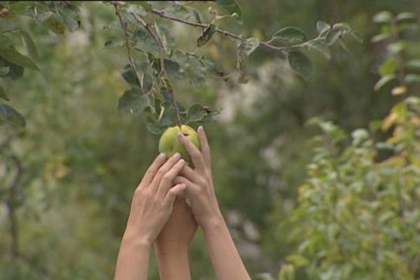 200 à 500 variétés de pommes en Franche-Comté : il en y a forcément une qui vous fera envie !