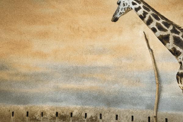 « Girafe et lumière »