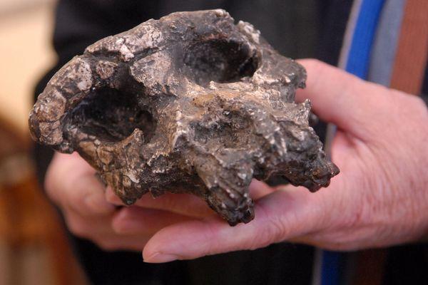 Le 05 mars 2008, le professeur Michel Brunet (université de Poitiers) présente Sahelanthropus Tchadensis, plus connu sous le nom de Toumaï.