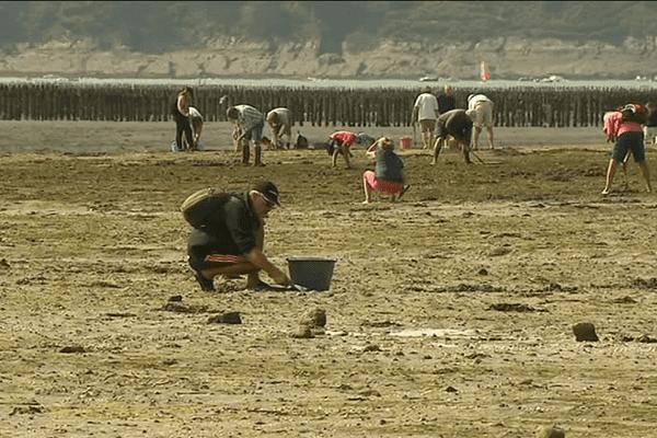 De nombreux pêcheurs à pieds viennent profiter des plages bretonnes lors des grandes marées