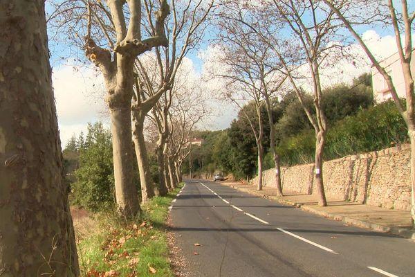 Rangée de platanes empoisonnés à l'entrée de Faugères : à qui profite le crime?