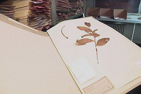 L'une des planches de l'Institut de Botanique de Montpellier