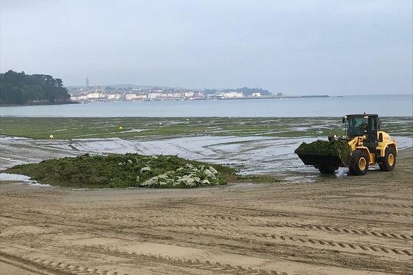 Ramassage d'algues vertes sur la plage du Ris à Douarnenez le 2 juillet 2021