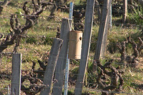 Les nichoirs ont été installés dans 9 vignobles du Diois, dans la Drôme - Février 2020