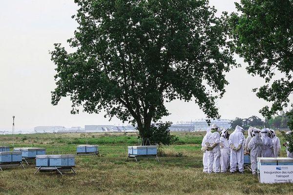 Les ruches en bord de pistes à l'aéroport Toulouse-Blagnac