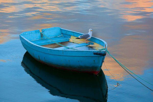 Un goéland méfiant garde sa barque à Concarneau... (29)