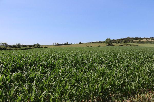 Un champ du hameau de Colincthun, à Bazinghen.