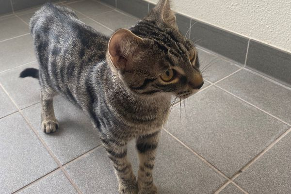 A Strasbourg, un chaton a permis à son maître d'être pris en charge alors qu'il avait fait un malaise.