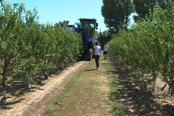 Victor et Manon Planes sont parvenus à récolter dans les Pyrénées-Orientales des amandes et des olives avec la même machine. Une première en France. août 2021.