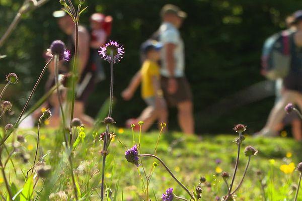 De très nombreux randonneurs affluent dans les Pyrénées cet été, mais tous ne savent pas comment se comporter en montagne tout en respectant la nature et le pastoralisme.