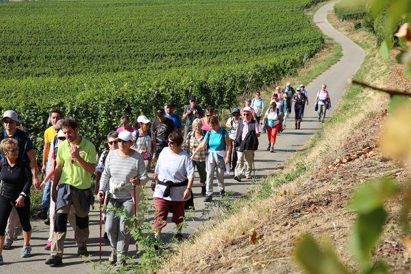 Les marcheurs dans le vignoble de la couronne d'or, autour de Marlenheim