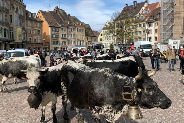 Les Vosgiennes traversent la ville de Mulhouse