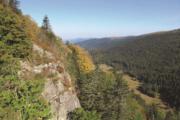Dans la vallée glacière de Fossat (Puy-de-Dôme), la forêt ancienne et mature sera bientôt à l'honneur dans une visite virtuelle.