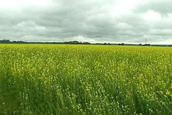 La Saône-et-Loire devance pour la première fois les 3 autres départements bourguignons en nombre de conversions.