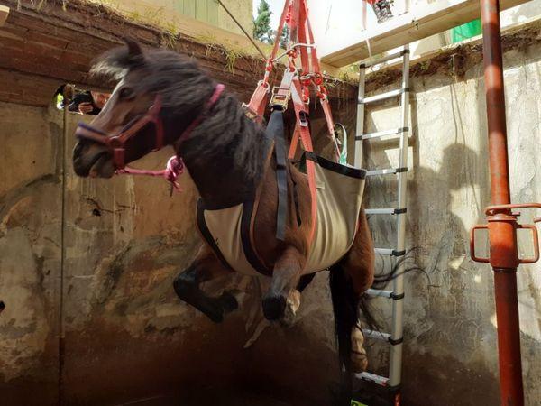 Le cheval a été sédaté avant d'être soulevé par des moyens mécaniques.