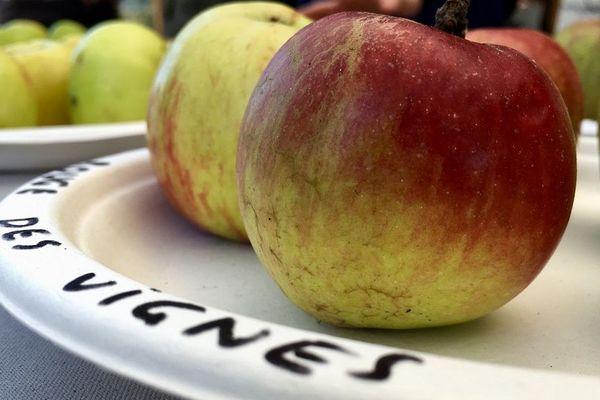 Les amoureux des pommes anciennes étaient à Roziers-Saint-Georges en Haute-Vienne