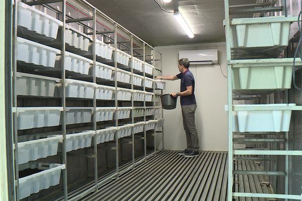 Julien Pungier, co-gérant de la ferme lombricole du Moutta, nourri ses vers de terre dans son entrepôt de Bizanos
