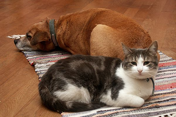 Chiens et chats sont 1,5 million en Occitanie, 15 millions en France